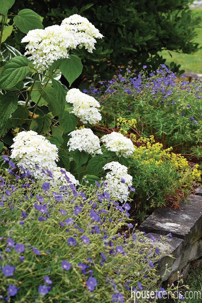 Hydrangea stand out in a flower bed