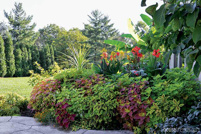 Plants add tropical flair to a back yard