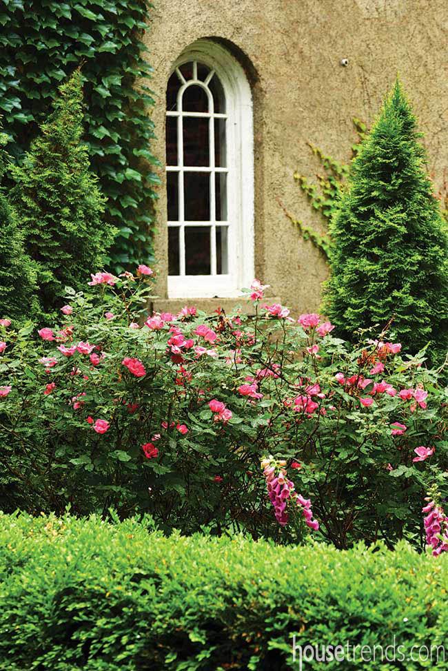 Flowers pop in a landscape