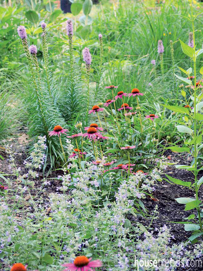 Flowers attract hummingbirds