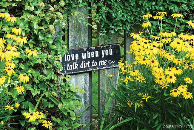 Black-Eyed Susans decorate a privacy fence