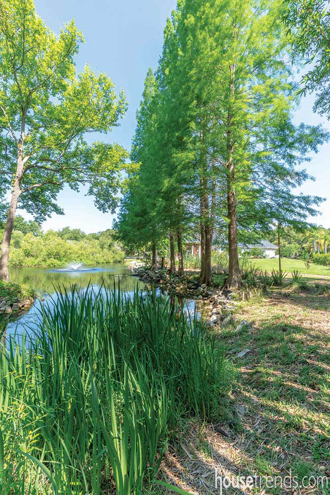 Cypress trees line a pond