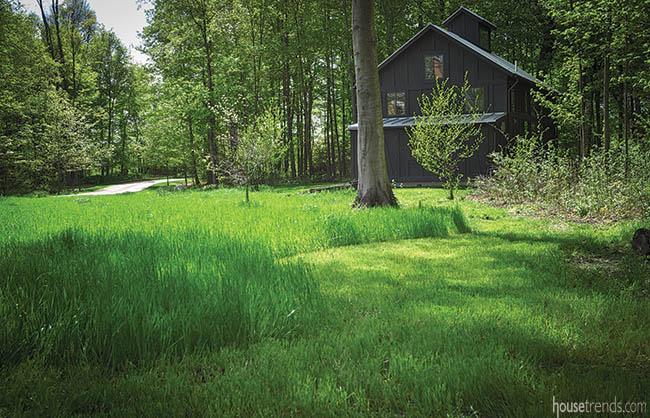 Landscape design embraces native grass