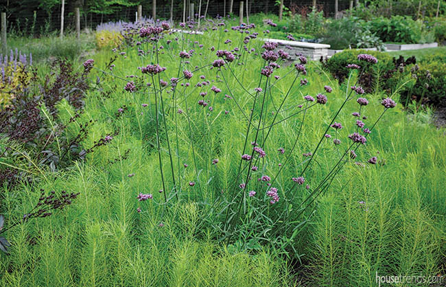 Purple flowers pop in a bed of perennials