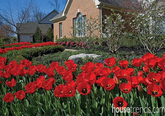 Tulips take over a landscape design
