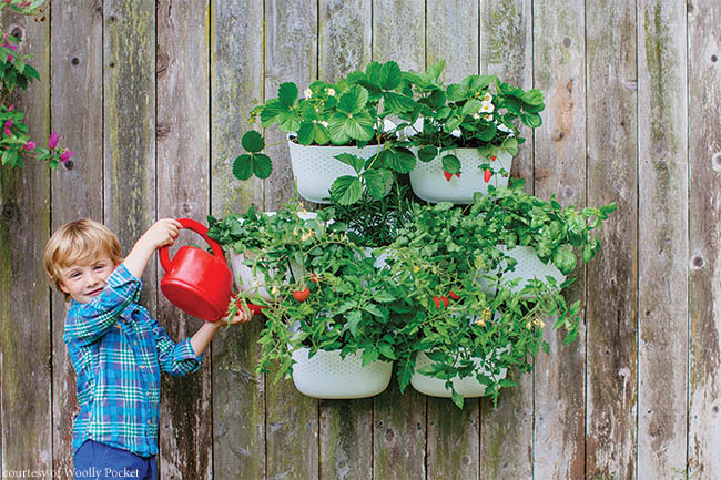 Planters merge to form a vertical garden