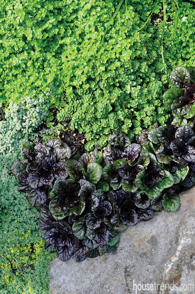 Plants add texture to a natural garden